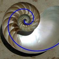 wp NautilusCutawaySpiral