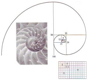 Fibonacciho spirala