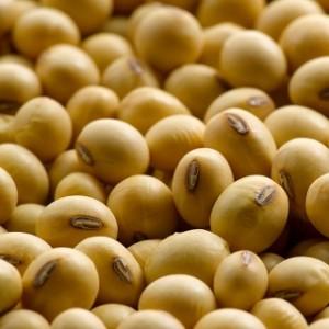 wp soybeans avatar